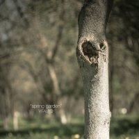 spring :: Vitaliy Dankov