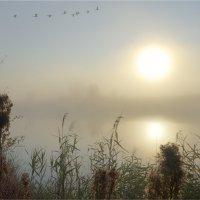 Утром на реке :: Nikita Volkov