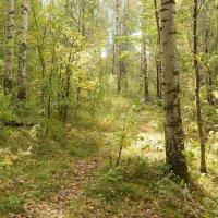 Лесными тропами :: Андрей Зайцев