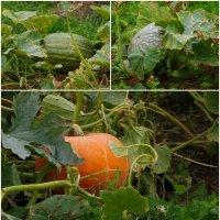 Вот и осень... :: Инна *