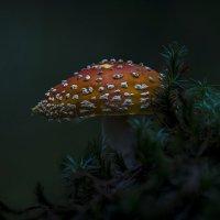 Вечер в лесу :: Алексей Строганов