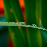 После дождя :: Дмитрий Сорокин