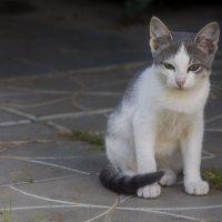 Чего надо? или сторожевой котенок. :: Людмила Волдыкова