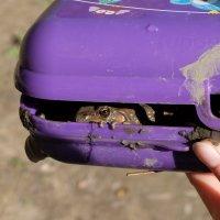 Контейнер для ловли лягушек :: Elena Sartakova