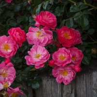«..Букет цветов — что может быть чудесней, Нежней что может и желанней быть! ?...» :: Андрей Нибылица