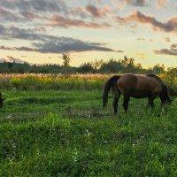 На лугу пасутся кони :: Виктор