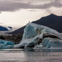 Голубые льды Тсландии :: Shapiro Svetlana