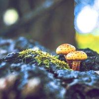 В лесу :: Екатерина Яицкая