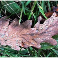 Осень в саду :: muh5257
