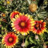 Цветы аномального лета Фото №3 :: Владимир Бровко