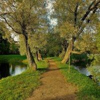 Там,где ивы шепчут про осень... :: Sergey Gordoff