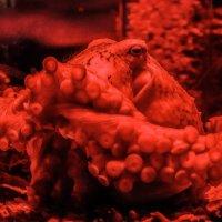 Мыслитель морских глубин :: Дмитрий Проскурин