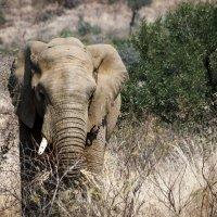 Слон :: Василий Игумнов