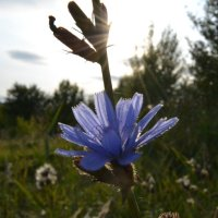 Цветок :: Алексей Ефимов