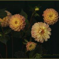 Последние цветы осени. :: Марина Никулина