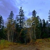 Осенняя триумфальная арка леса :: Владимир Куликов