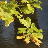 Осенний реверанс.... :: Tatiana Markova