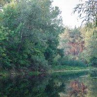 природа в Царичанке, река Ориль :: Владимир Боровков