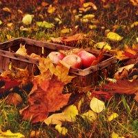 осень :: Клаудия Мойш
