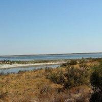 Река Чу, пустыня Бетпак-Дала :: Алла