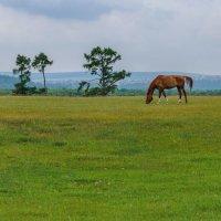 Одинокая лошадь :: Владимир Гришин