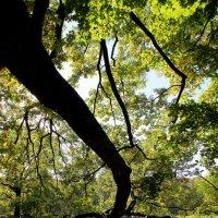 Старинные парки хранят свои тайны. :: Ирина Фирсова