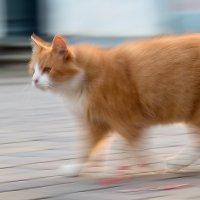 Выбежала кошка из-за угла. :: Igor Shoshin