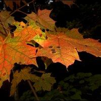 Осень, однако... :: Василиса Никитина
