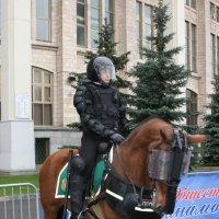 На страже правопорядка :: Дмитрий Солоненко