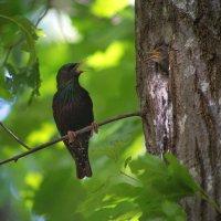 Пташки :: Катарина Винниченко