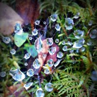Жемчужины леса... :: Natalisa Sokolets
