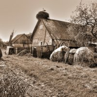Сепиниана   Сельская жизнь :: олег свирский