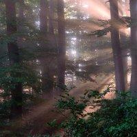 """""""костёр"""" в тумане светит :: Elena Wymann"""