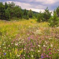 Цветочное лето :: Любовь Потеряхина