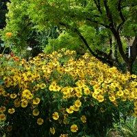 """""""Осенние цветы, вы  ярки и красивы, И пышен ваш торжественный наряд...."""" :: Galina Dzubina"""