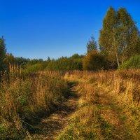 Осень наступает :: Андрей Дворников