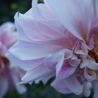 Мир через розовые очки :: Мария Емельянова