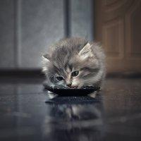 -Люблю поесть.., разве может это надоесть...) :: Лилия .