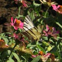 На лужайке бабочки на цветочки сели :: Наталья (D.Nat@lia)