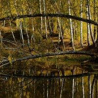 Лесное озерцо :: Андрей + Ирина Степановы