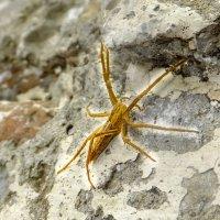 DSCF7455 паук :: Олег Петрушин
