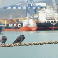 В порту :: Константин
