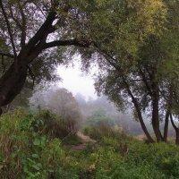 Тумана зыбкие границы... :: Лесо-Вед (Баранов)