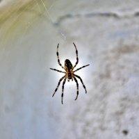 паук :: Иван Владимирович Карташов