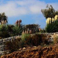 И на камнях цветы растут :: Alexander Andronik