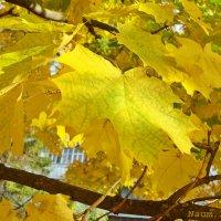 Сквозь листву :: Лидия (naum.lidiya)