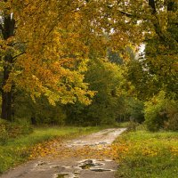 Осень. :: Елена Струкова