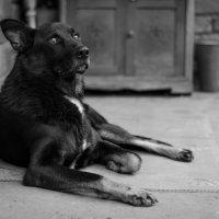 Любимая собака :: Вера Корниенко