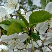 Воспоминание о весне :: Нина Корешкова