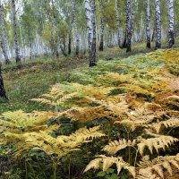 В Осеннем Лесу Папортник... :: Дмитрий Петренко